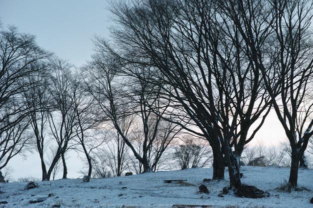 曽爾,屏風岩公苑,雪景(DP3Q0046b,f-5,dp3Q)2015yaotomi_.jpg