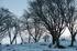 曽爾,屏風岩公苑,雪景(DP3Q0046b,f-5,dp3Q,FULL)2015yaotomi_.jpg