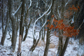 曽爾,屏風岩公苑,雪景(DP3Q0073,f-2.8,dp3Q,FULL)2015yaotomi.jpg