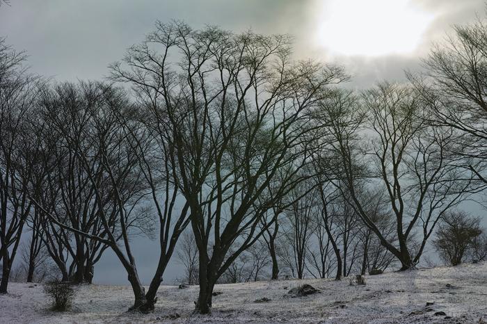 曽爾,屏風岩公苑,雪景(DP3Q0127,f-7.1,dp3Q)2015yaotomi_.jpg