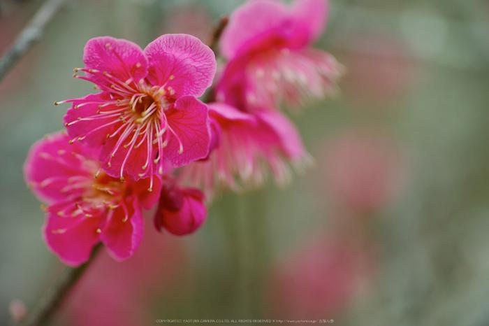 曽爾,屏風岩公苑,雪景(DP3Q0224a,f-3.2,dp3Q)2015yaotomi_.jpg