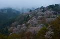 奈良吉野山,桜(PK3_1793,21 mm,5.6,K3_F)2015yaotomi_.jpg