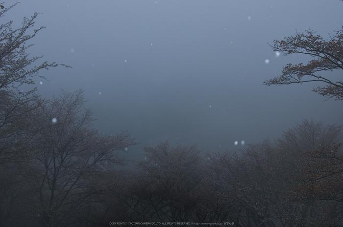 奈良吉野山,桜(PK3_1809,24 mm,F5.6_K3)2015yaotomi.jpg