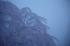奈良西吉野,桜(IMG_7935,157 mm,F5,5DII,F)2015yaotomi_.jpg