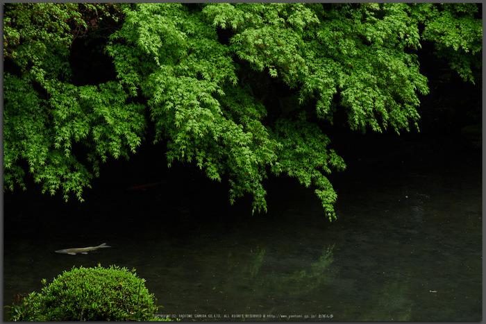 洛北蓮花寺,新緑(P9710744,43-mm,2.8,DMC-GX7t)2015yaotomi_.jpg