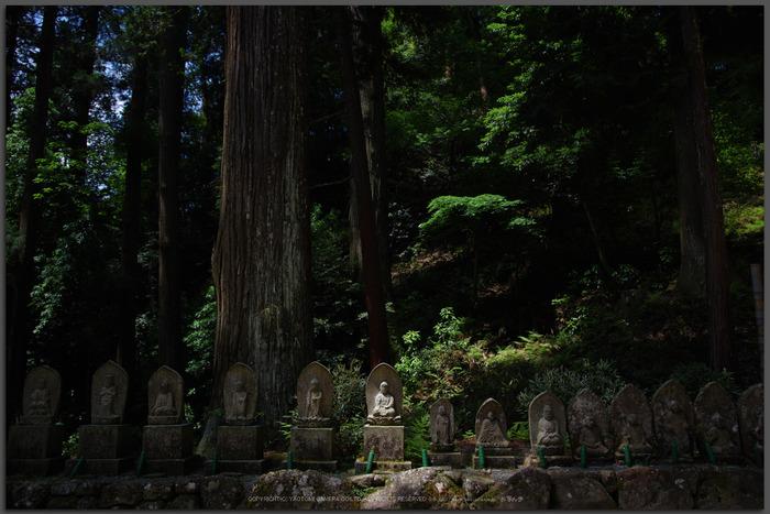 室生寺,新緑(K32_0242,F1.8,18-mm)2015yaotomi_T.jpg
