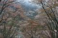 曽爾屏風岩公苑,桜(PK3_3229,35 mm,F7.1,K3)2015yaotomi_.jpg