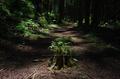 桑ノ木の滝,新緑(K32_0406,21 mm,F3.2,F)2015yaotomi 1.jpg