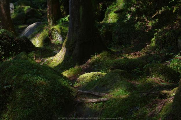 桑ノ木の滝,新緑(K32_0518,55 mm,F6.3)2015yaotomi.jpg
