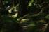 桑ノ木の滝,新緑(K32_0518,55 mm,F6.3,FULL)2015yaotomi.jpg