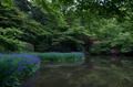 長岳寺,カキツバタ(PK3_4726,18 mm,F5,K3)2015yaotomi_F.jpg