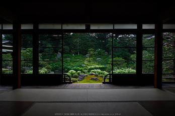 両足院,半夏生(PEM10006,12 mm,F5.6)2015yaotomi_ 3.jpg