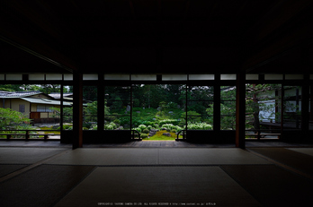 両足院,半夏生(PEM10008,7 mm,F5.6)2015yaotomi_2.jpg