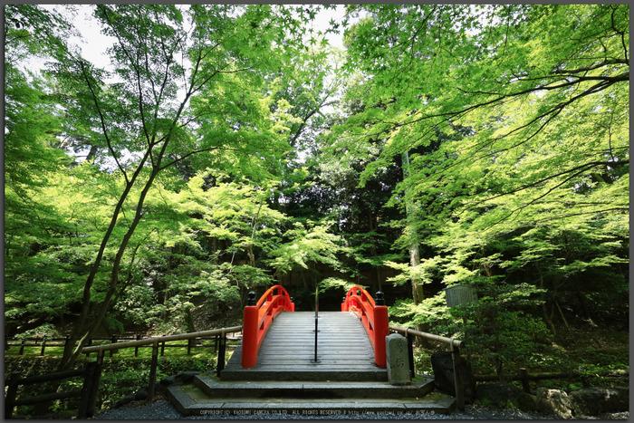 北野天満宮,御土居の青もみじ(IMG_0489,11-mm,F8)2015yaotomi_T.jpg