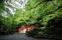 北野天満宮,御土居の青もみじ(IMG_0526_full,11 mm,F4)2015yaotomi_.jpg