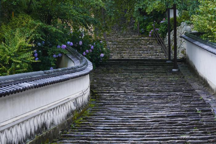 奈良,長谷寺,紫陽花(P1010211,61 mm,F8)2015yaotomi_.jpg