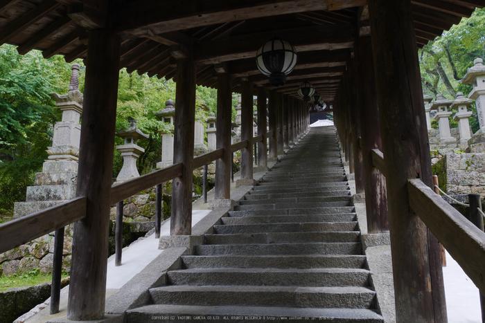 奈良,長谷寺,紫陽花(P1010255,14 mm,F9)2015yaotomi_.jpg