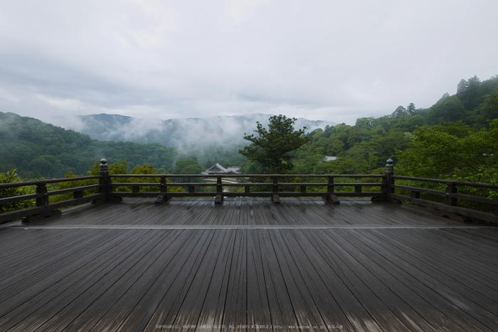 奈良,長谷寺,紫陽花(P1010273,7 mm,F9)2015yaotomi_.jpg