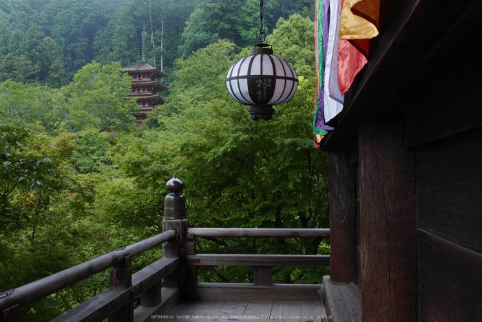 奈良,長谷寺,紫陽花(P1010278,21 mm,F9)2015yaotomi_.jpg