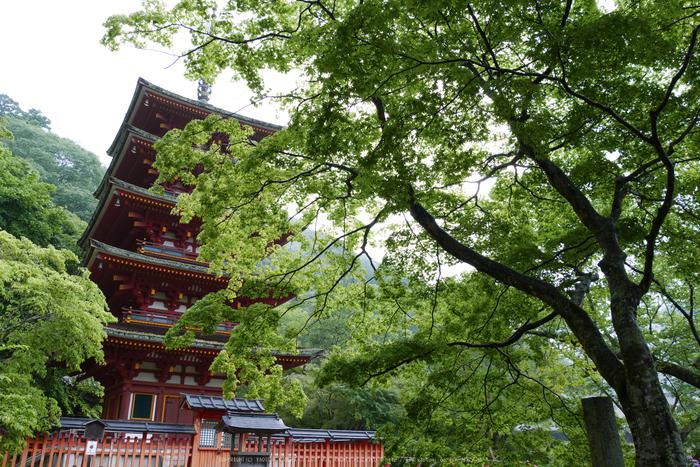 奈良,長谷寺,紫陽花(P1010292,14 mm,F8)2015yaotomi_.jpg