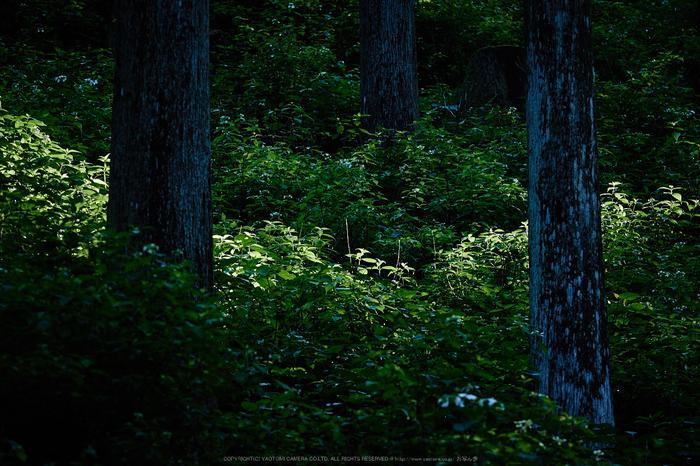 宇陀,小紫陽花(_6100418,130 mm,F4.5)2015yaotomi_.jpg