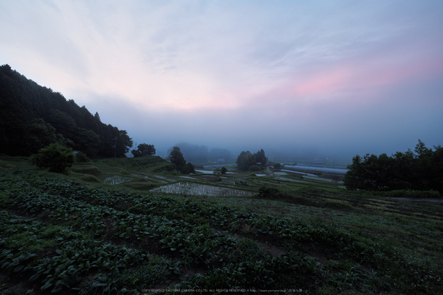 宇陀安田,朝景(_6100221hi,7 mm,F4,jp)2015yaotomi_.jpg