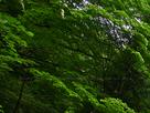 御船の滝(PEM10090,F2.8)2015yaotomi_.jpg