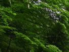 御船の滝(PEM10091,F3.2)2015yaotomi_.jpg