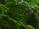 御船の滝(PEM10092,F3.5)2015yaotomi_.jpg