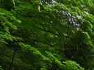 御船の滝(PEM10093,F4)2015yaotomi_.jpg