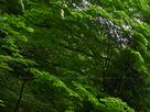 御船の滝(PEM10094,F4.5)2015yaotomi_.jpg