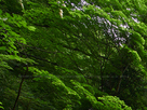 御船の滝(PEM10095,F5)2015yaotomi_.jpg