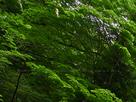 御船の滝(PEM10098,F6.3)2015yaotomi_.jpg
