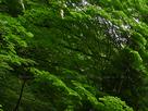 御船の滝(PEM10099,F7.1)2015yaotomi_.jpg
