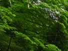 御船の滝(PEM10101,F9)2015yaotomi_.jpg