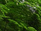 御船の滝(PEM10102,F10)2015yaotomi_.jpg