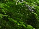 御船の滝(PEM10104,F13)2015yaotomi_.jpg