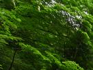 御船の滝(PEM10105,F14)2015yaotomi_.jpg