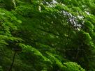 御船の滝(PEM10107,F18)2015yaotomi_.jpg