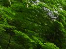 御船の滝(PEM10108,F20)2015yaotomi_.jpg