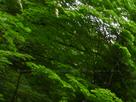御船の滝(PEM10109,F22)2015yaotomi_.jpg