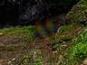 御船の滝(PEM10128,F14)2015yaotomi_.jpg