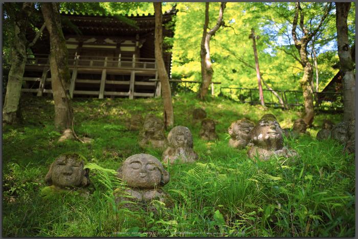 愛宕念仏寺,新緑(IMG_0394,22-mm,F2)2015yaotomi_T.jpg