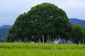 明日香,川原寺(DP3Q1001,F6.3)2015yaotomi_FULL.jpg