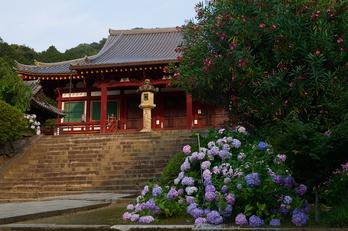 矢田寺,紫陽花(PEM10334,20 mm,F6.3)2015yaotomi_.jpg