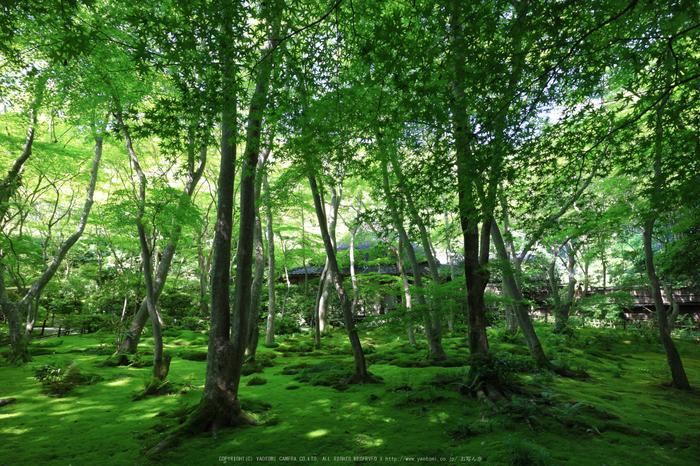 祇王寺,新緑(IMG_0278,11 mm,F8)2015yaotomi_.jpg