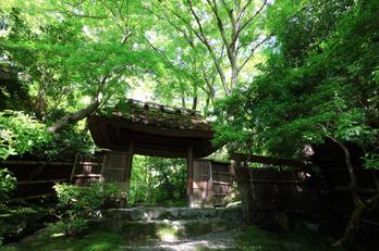 祇王寺,新緑(IMG_0291,11 mm,F8)2015yaotomi_.jpg