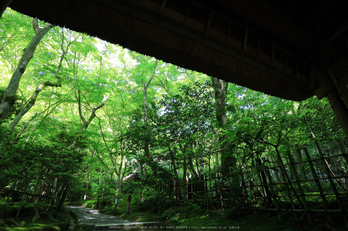 祇王寺,新緑(IMG_0294a,11 mm,F8)2015yaotomi_.jpg