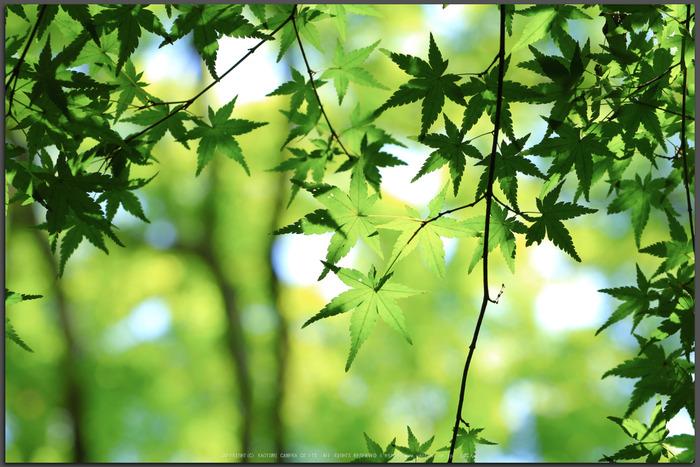 祇王寺,新緑(IMG_0390,100-mm,F6.3)2015yaotomi_t.jpg