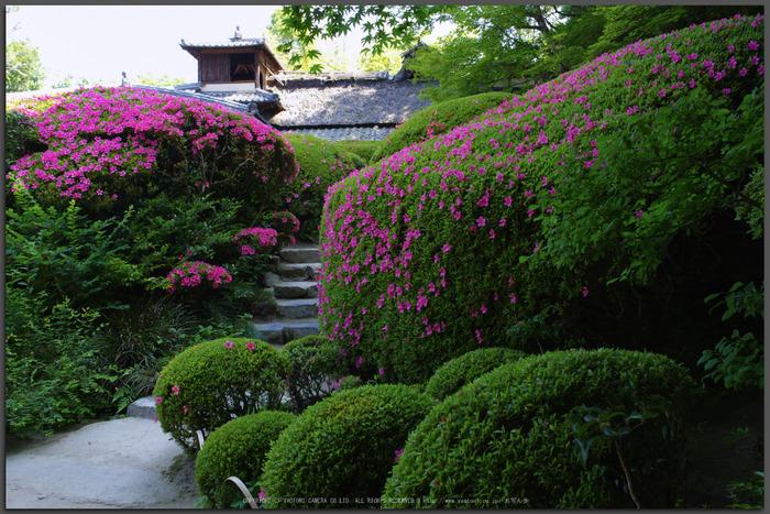 詩仙堂,さつき(K32_0398,21-mm,F6.3)2015yaotomi_T.jpg